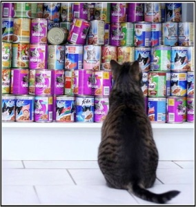cat reading food food